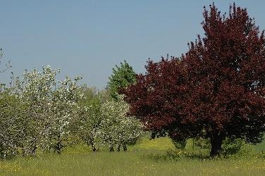 Alberi in fiori nel Parco Maurizio Cevenini