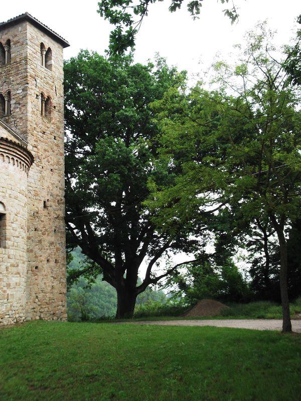La quercia di monte Armato è l'albero monumentale più maestoso del territorio oz