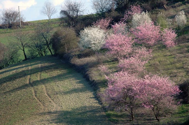 fioriture primaverili collina ozzano emilia